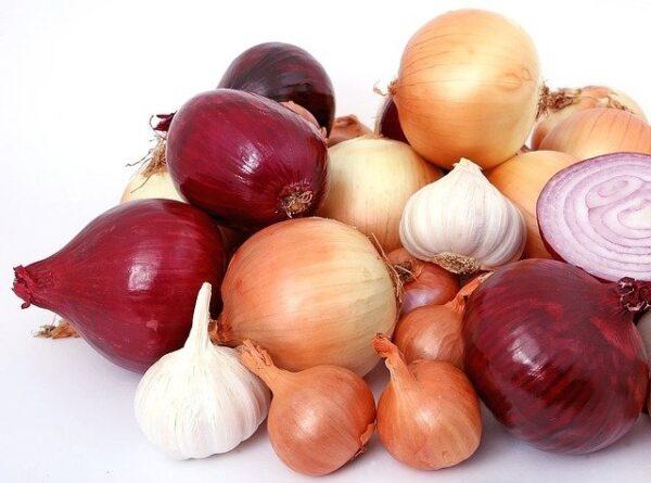 cibule česnek